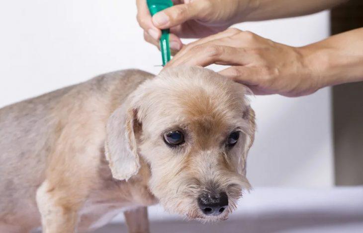 Лечение собаки от глист