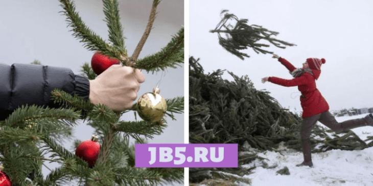 Что делать с елкой в феврале? Вторичное использование
