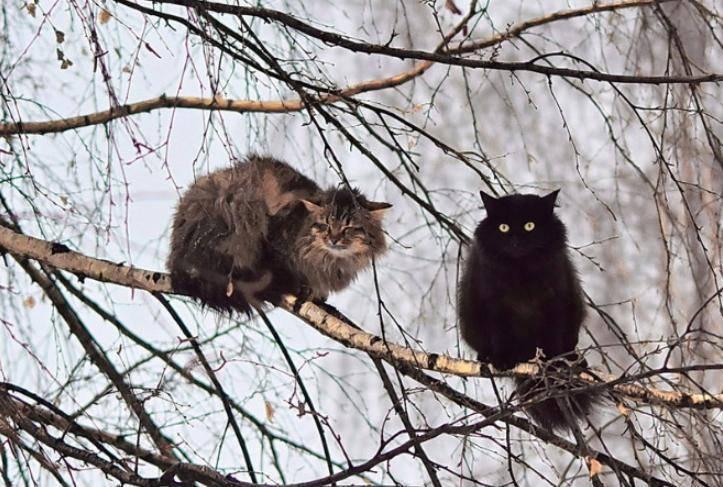 koty gotovyatsya k zime 2 Юмор 12