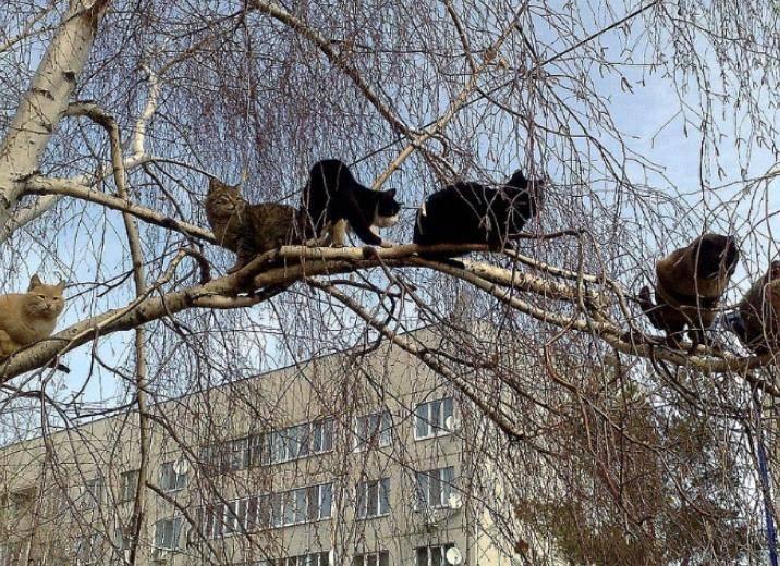 koty gotovyatsya k zime 3 Юмор 14