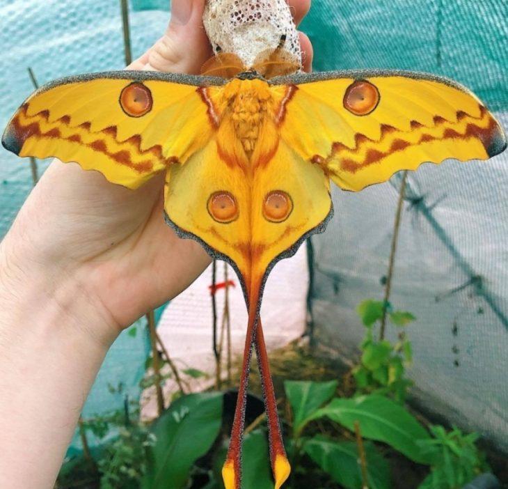 10 удивительно красивых фотографий бабочек, которые вы никогда раньше не видели