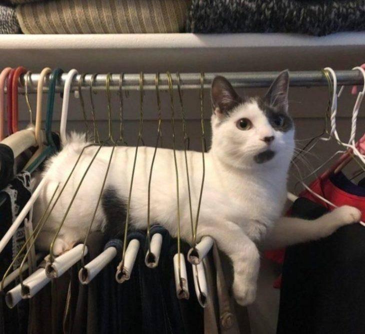 8. - решено: почему у меня на штанах всегда есть полоска кошачьего меха поперек ноги
