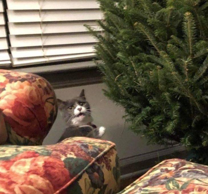 3. - кошка моей подруги никогда раньше не видела рождественской елки