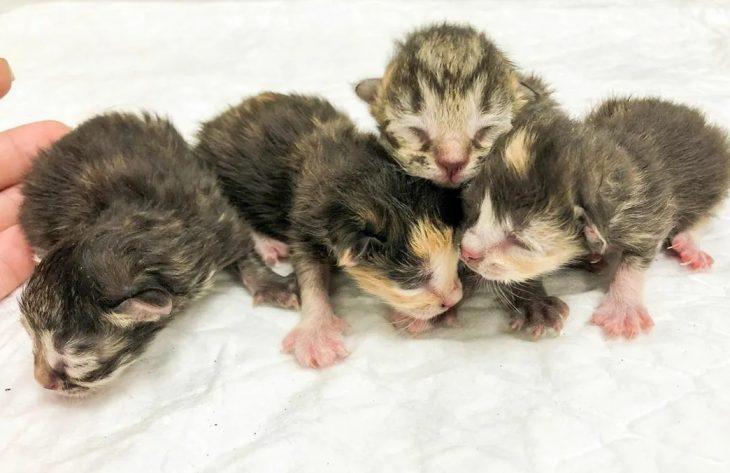 Первые котята после родов