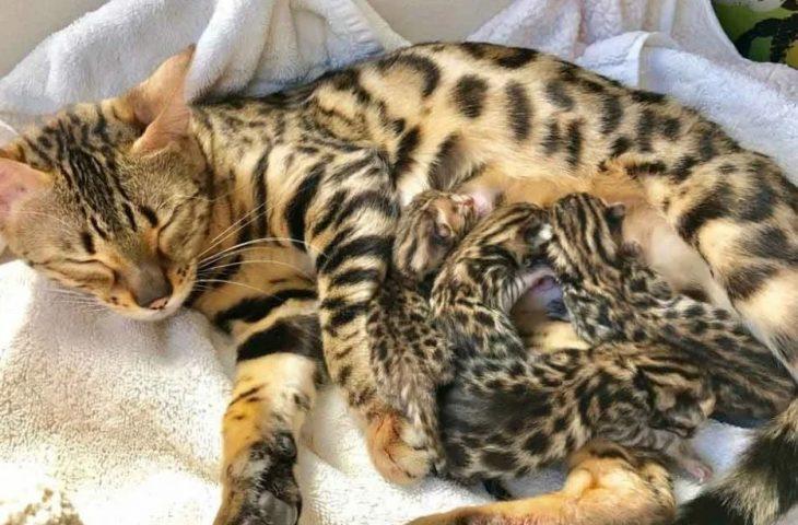 кошка сразу после родов
