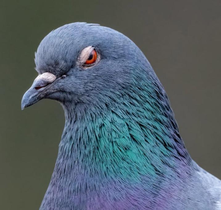 serditye ptichki 10 Юмор 51