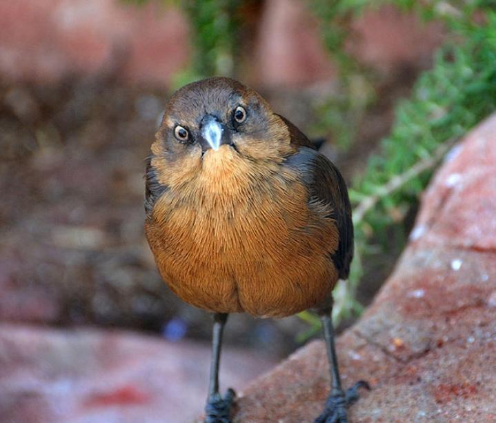serditye ptichki 5 Юмор 41