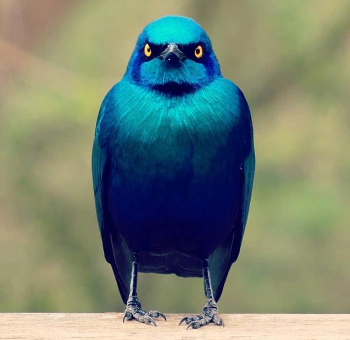 serditye ptichki 8 Юмор 47