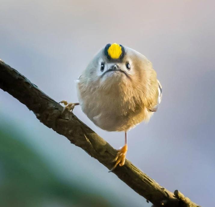 serditye ptichki 9 Юмор 49
