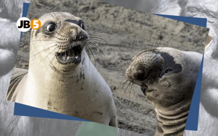Морские котики - смешные животные (10)