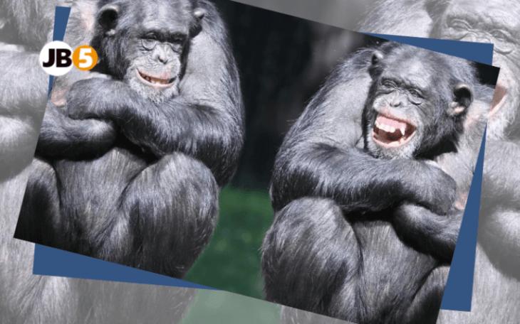 Макаки спорят - смешные животные (11)
