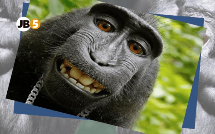 Обезьяна делает селфи - смешные животные (15)