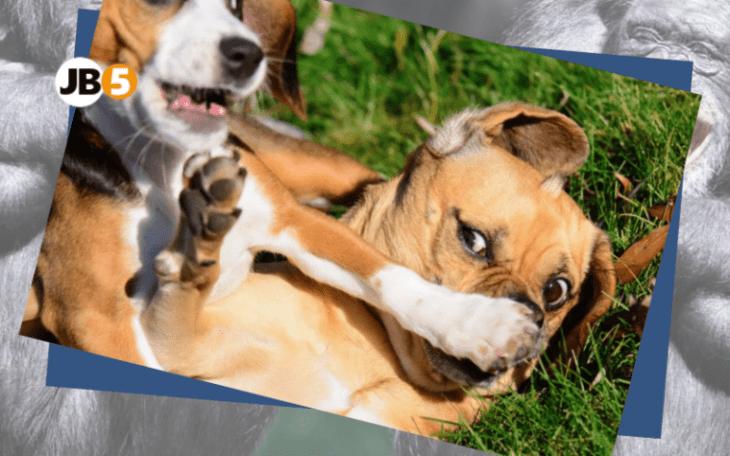 Собаки играют - смешные животные (16)