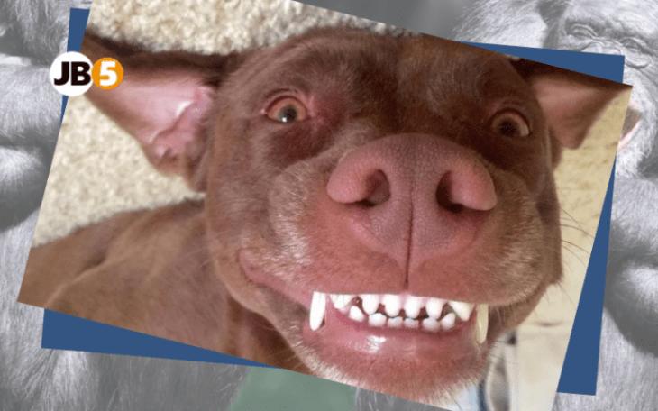 Собака улыбается - смешные животные (18)