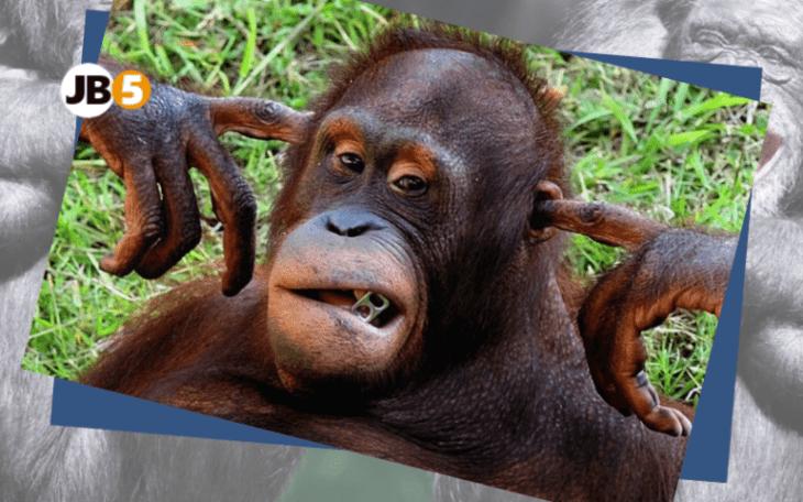 Обезьяна закрыла уши - смешные животные (19)