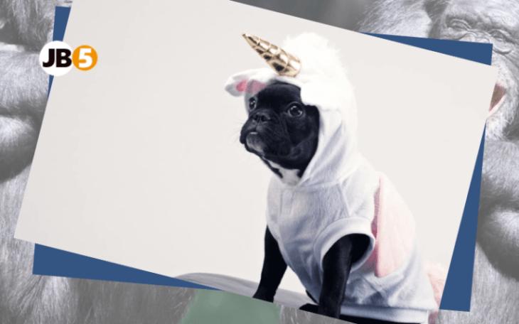Бульдог-единорог - смешные животные (2)