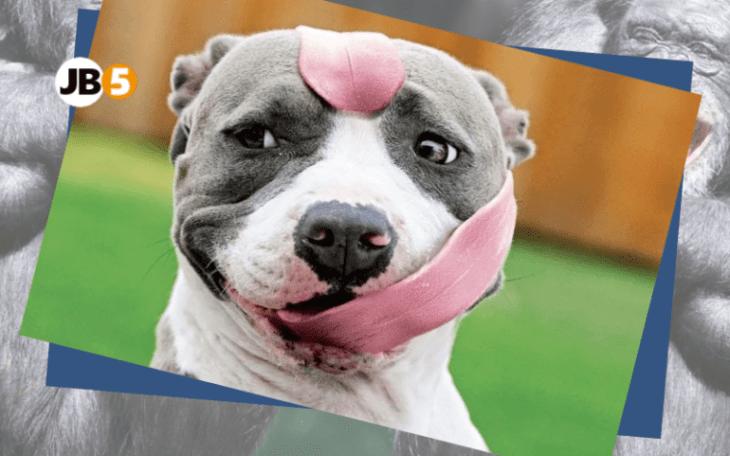 Собака с длинным языком