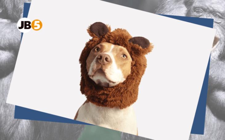 Собака в шапке - смешные животные (4)