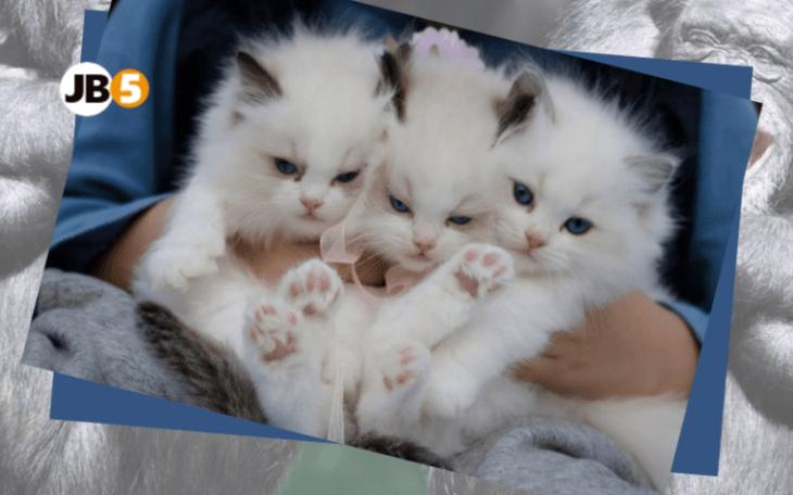 Сердитые котята -смешные животные (5)