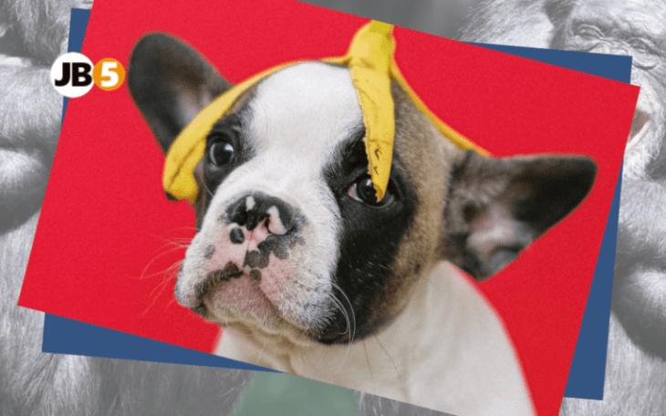 Собака с бананом - смешные животные (6)