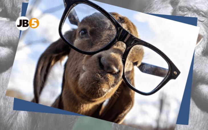 Овца в очках - смешные животные (7)