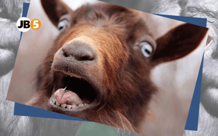 Овца кричит - смешные животные (8)