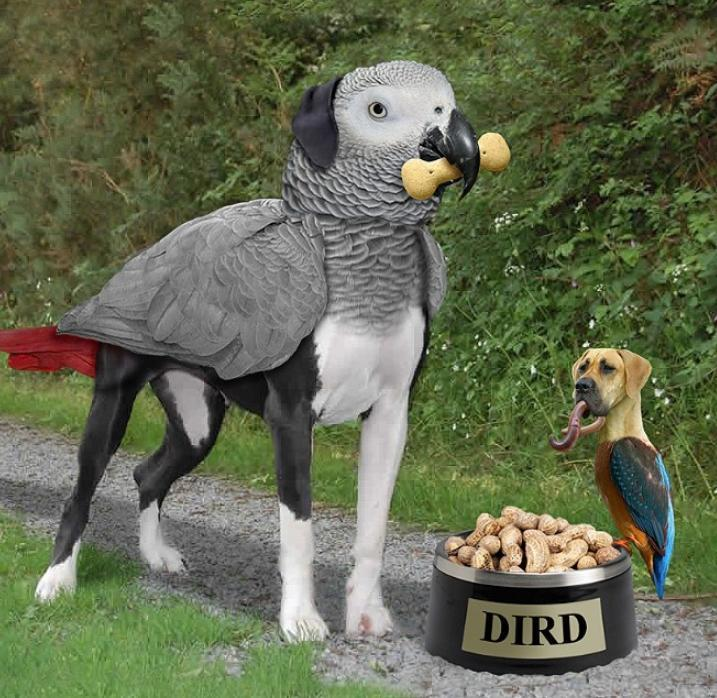 Собаки и птицы (2)