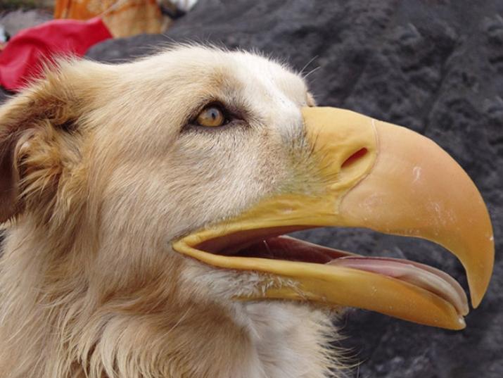 Собаки и птицы (4)