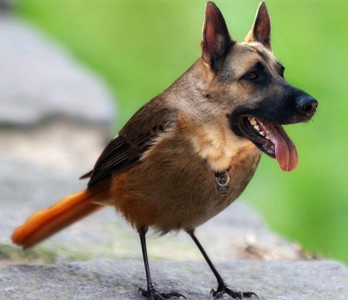 Собаки и птицы (5)