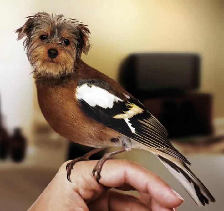 Собаки и птицы (6)