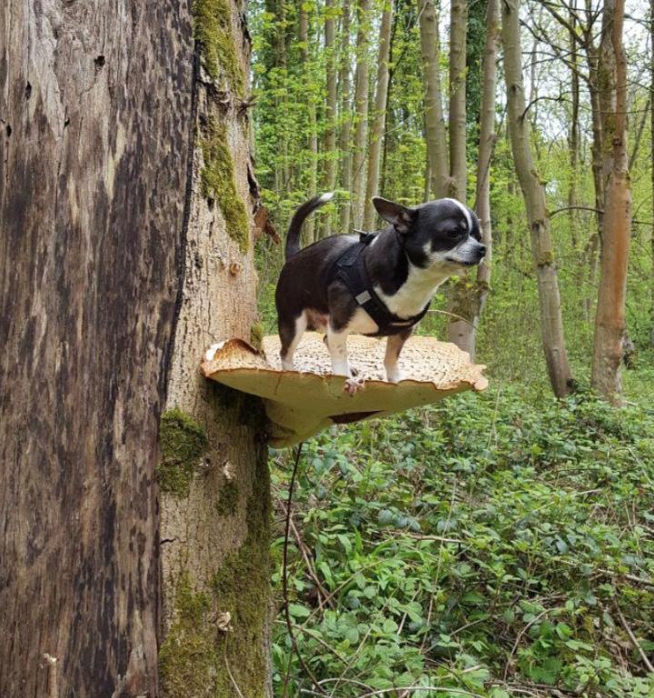 Собаки на грибах (1)