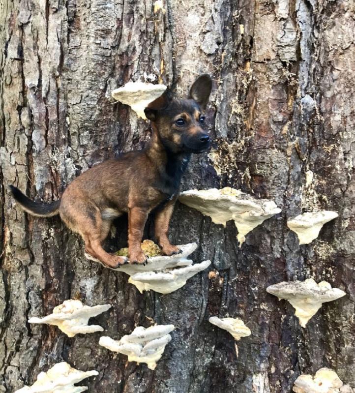 Собаки на грибах (2)