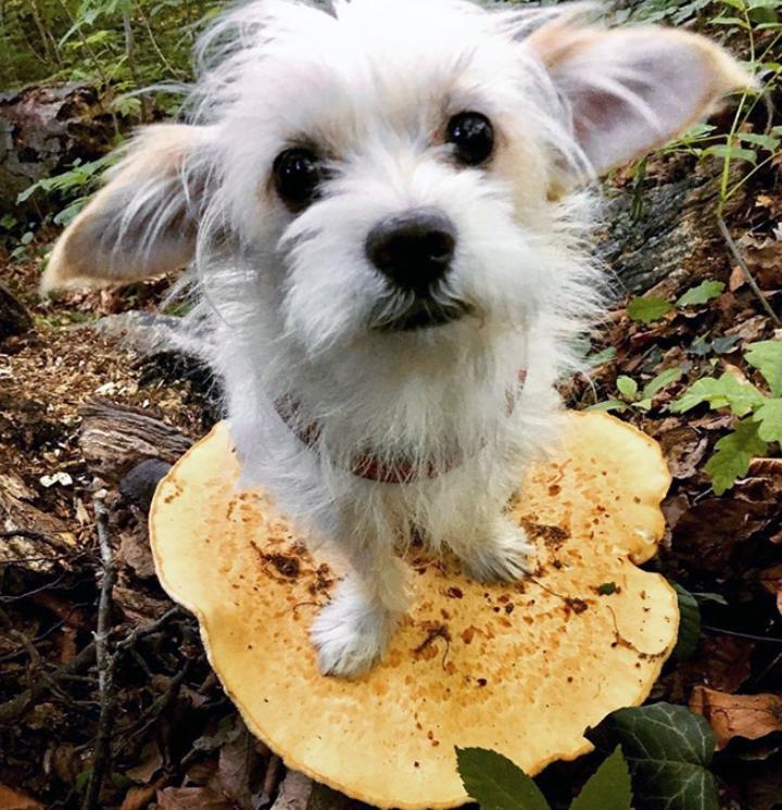 Собаки на грибах (3)