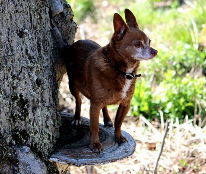 Собаки на грибах (4)