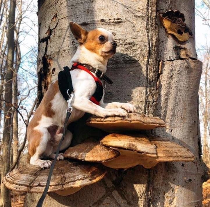 Собаки на грибах (6)