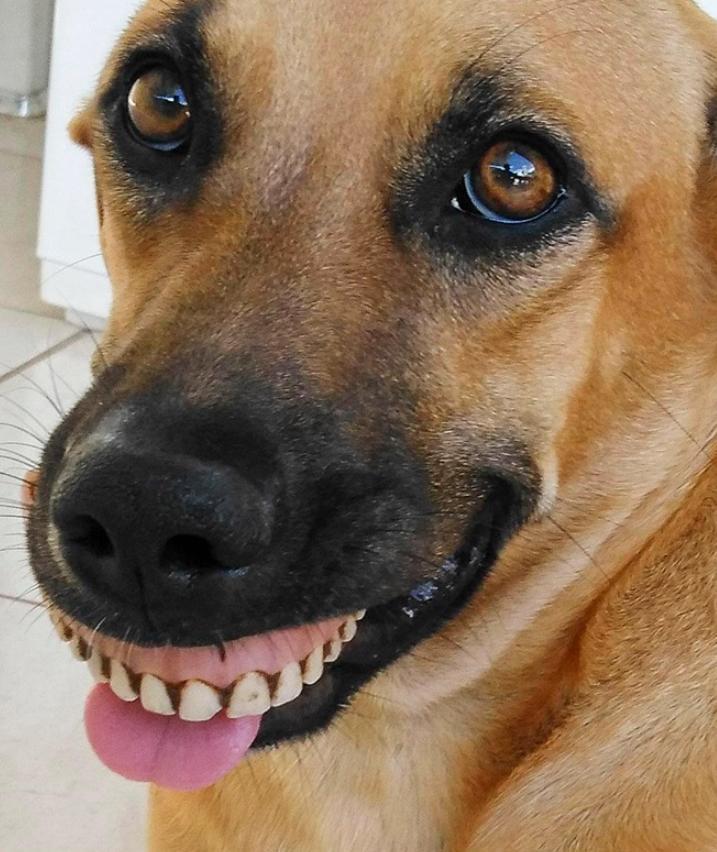 sobaki s chelovecheskimi zubnymi protezami 1 Юмор 18