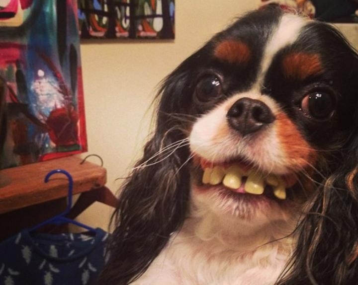 sobaki s chelovecheskimi zubnymi protezami 2 Юмор 2