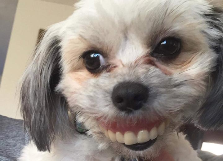 sobaki s chelovecheskimi zubnymi protezami 8 Юмор 14