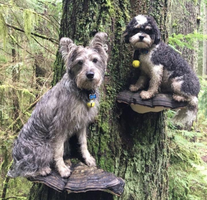 Странные фото с собаками (5)