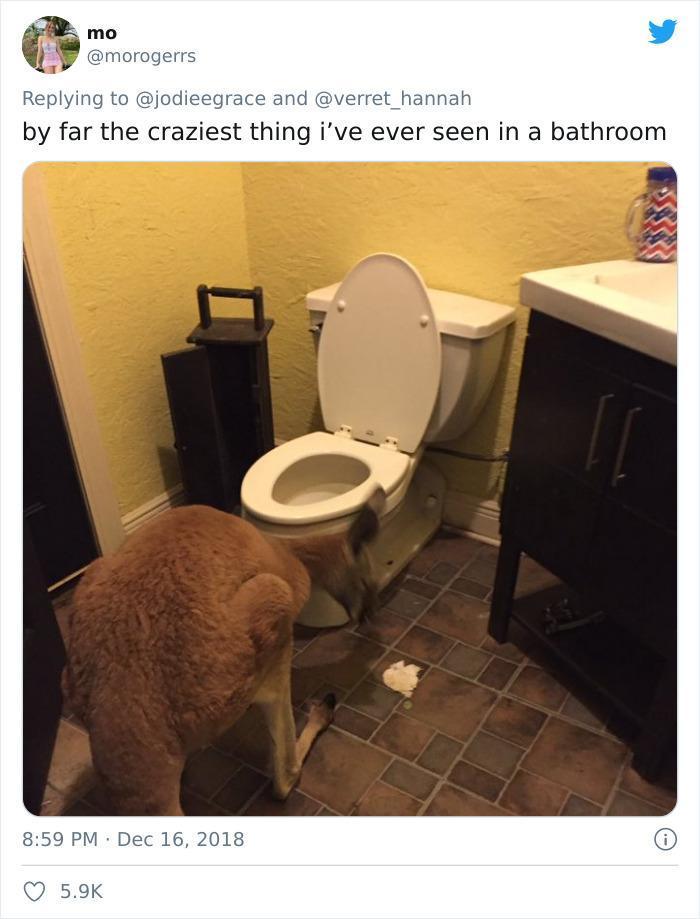 strannye veschi v vannyh i tualetah 6 Юмор 36